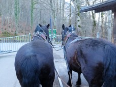 The handsome rears of Rasmus (left) and Sophie (right)