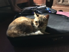 I had to pack my suitcase around the cat because it wouldn't budge from its spot.
