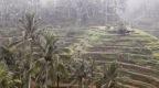 Rice and Rain in Ubud (Nov 29, 2018)